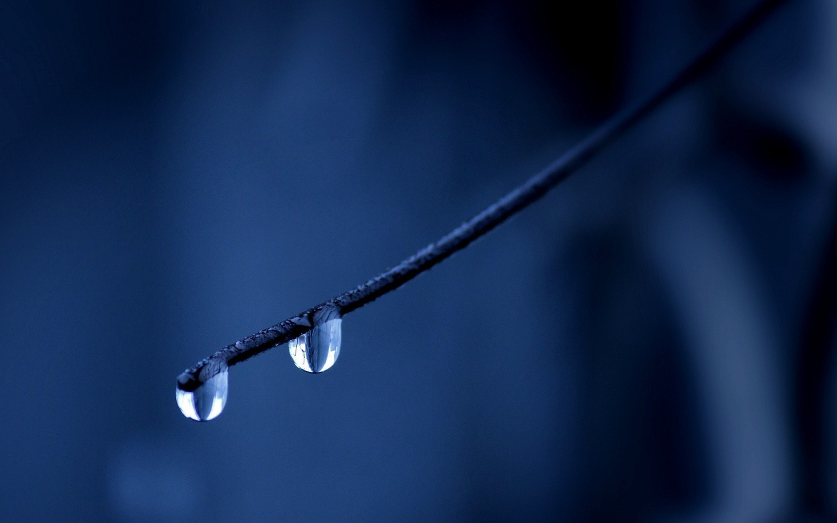 Nature Branch Water Drops