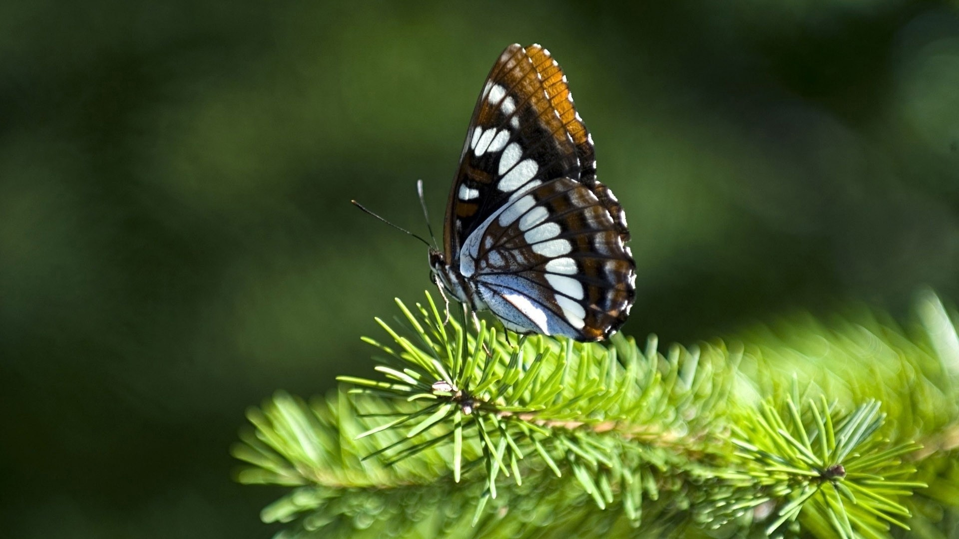 Butterfly Nature