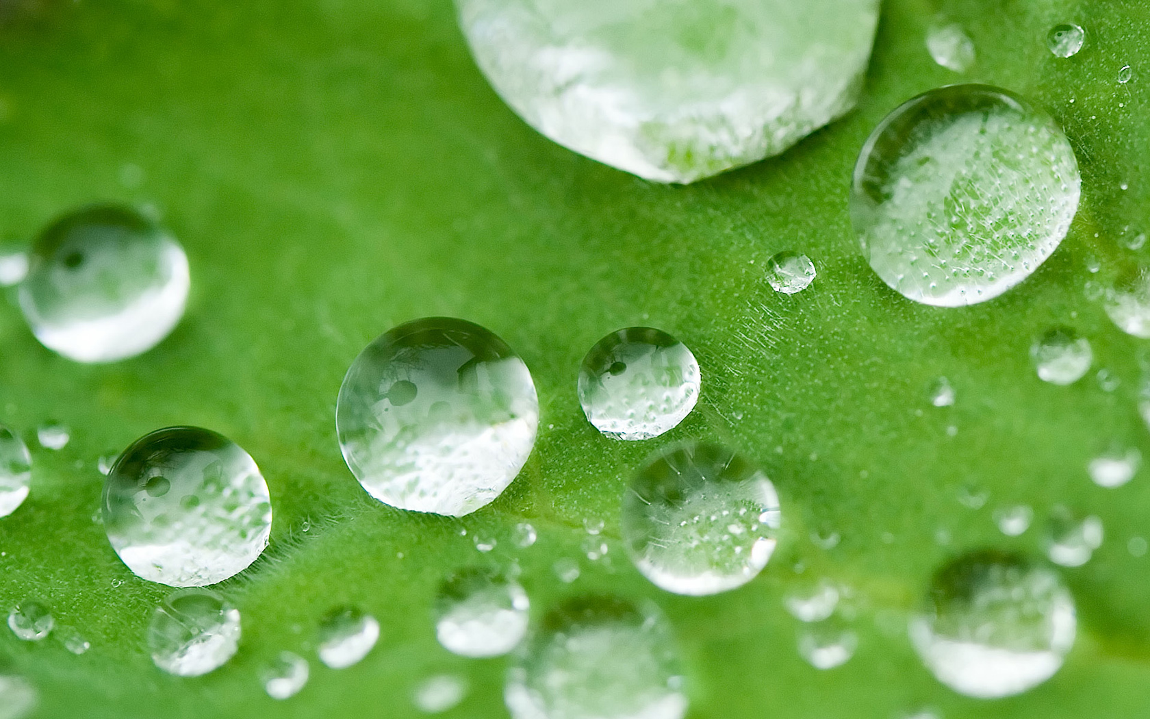 Close Up Water Drops Wallpaper 1680x1050