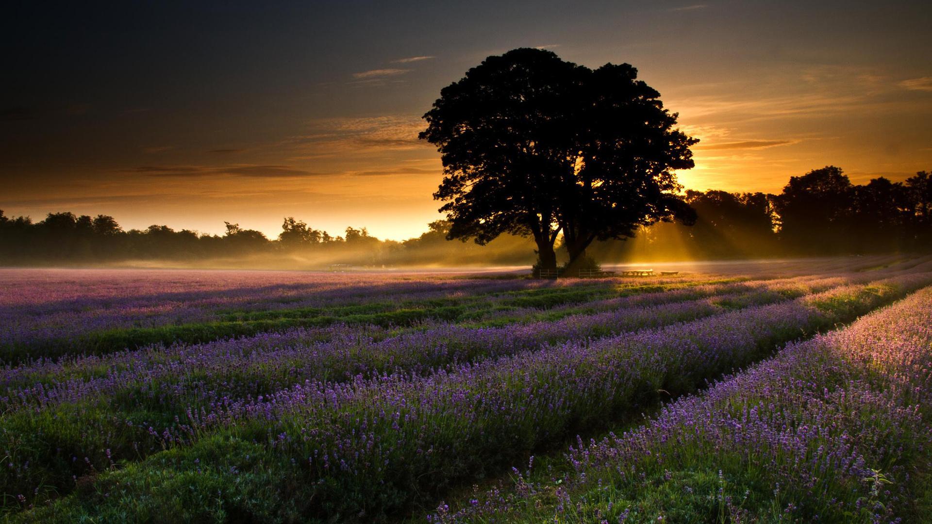 Nature Dawn Wallpaper