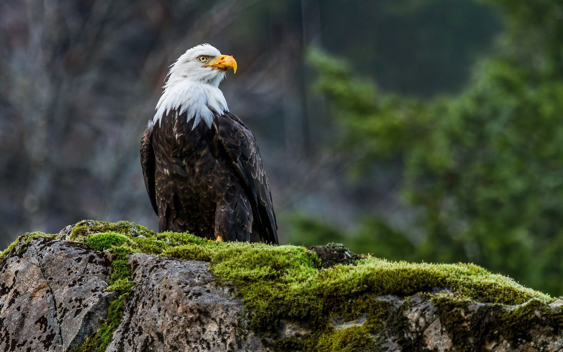 Nature Eagle Bird HD Wallpaper