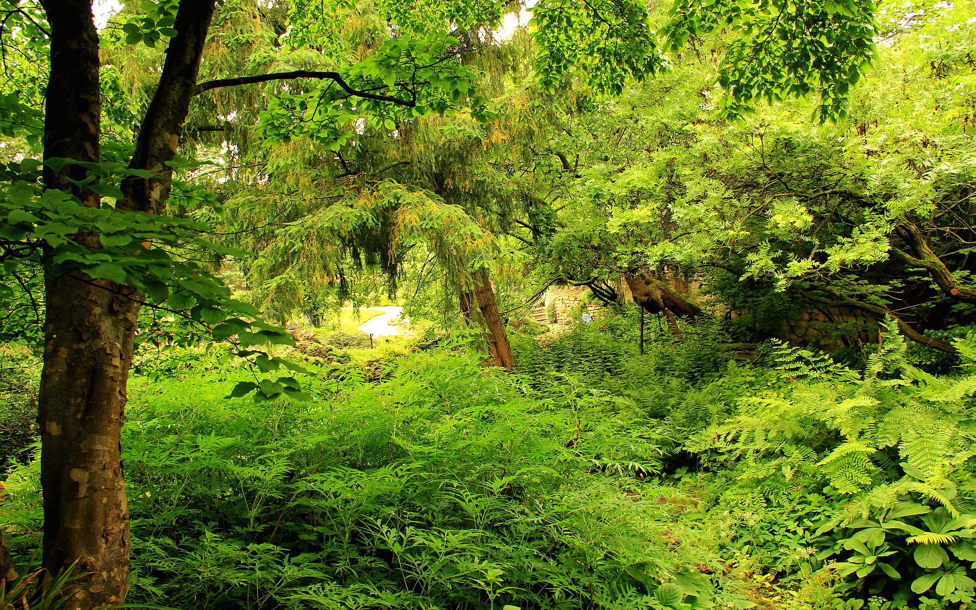 Nature flora