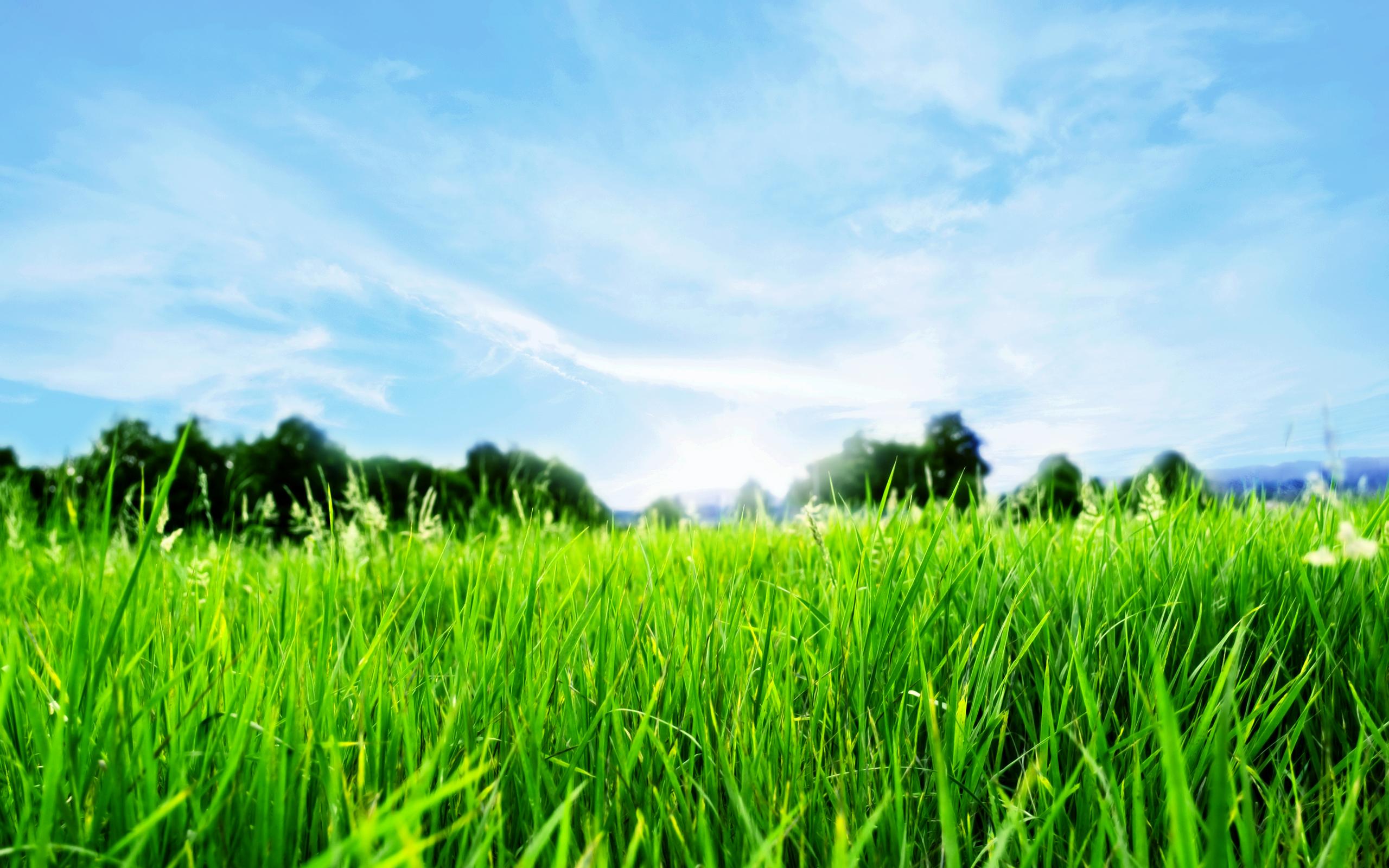 Grass Full Hd Nature Green Blue Grass Desktop Background