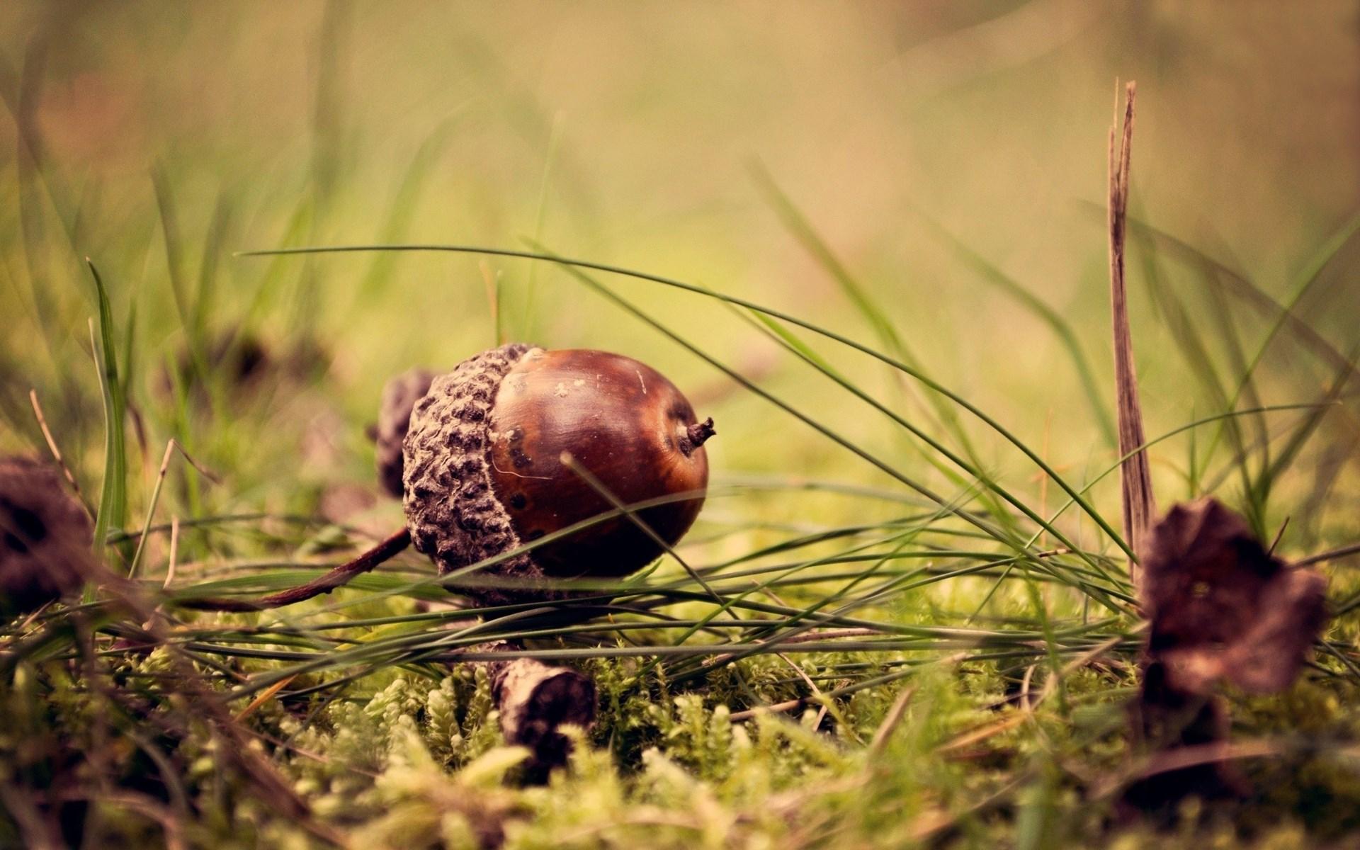 Nature Grass Acorn