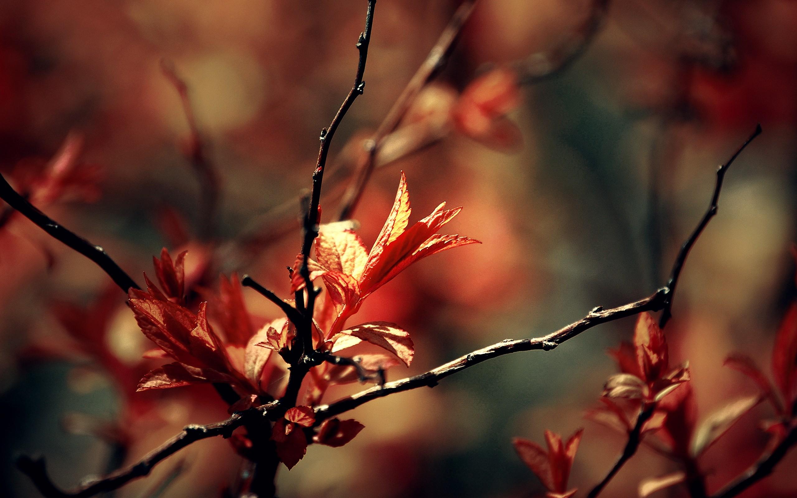 ... Nature Macro Wallpaper ...