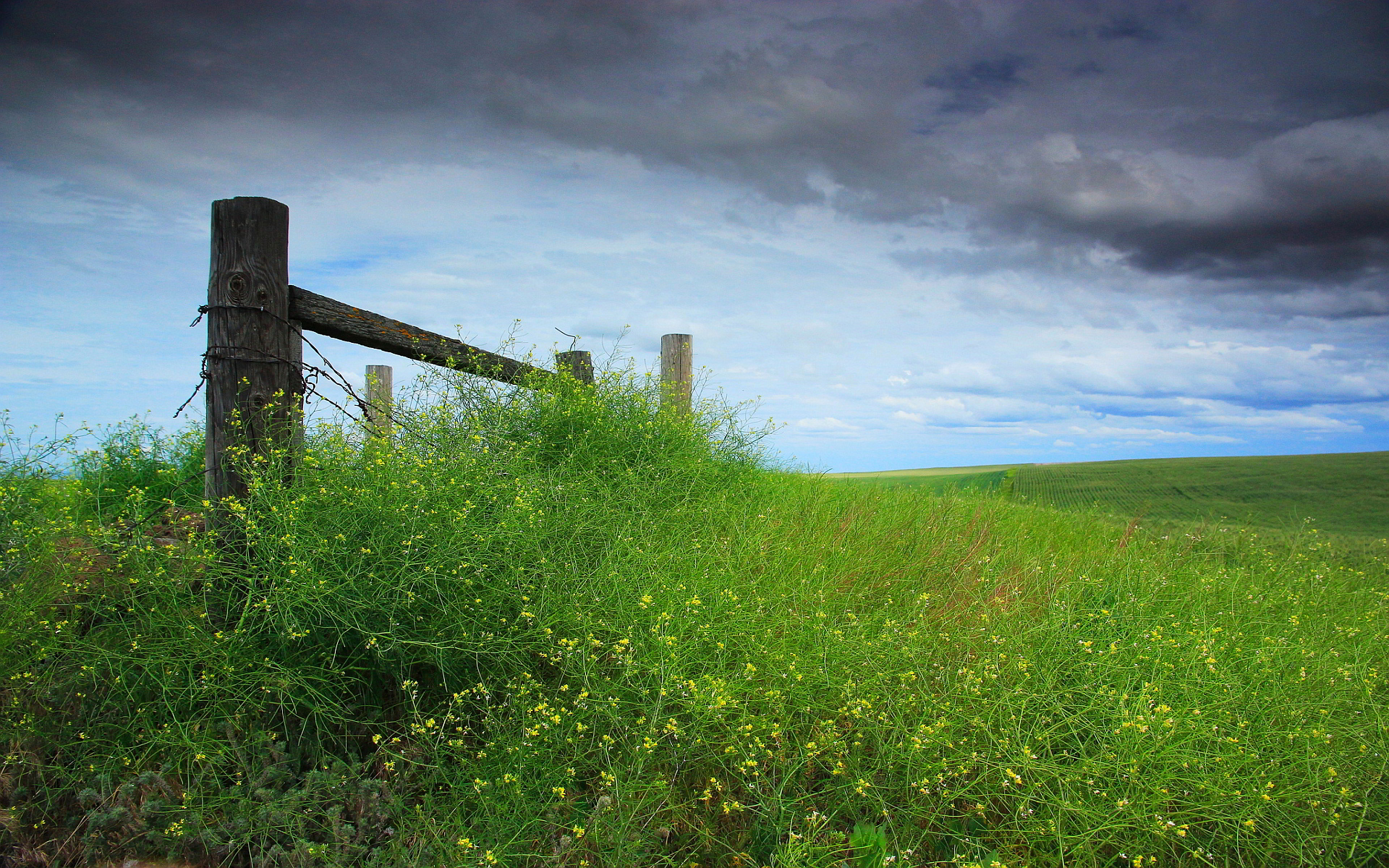 Nature meadow fence