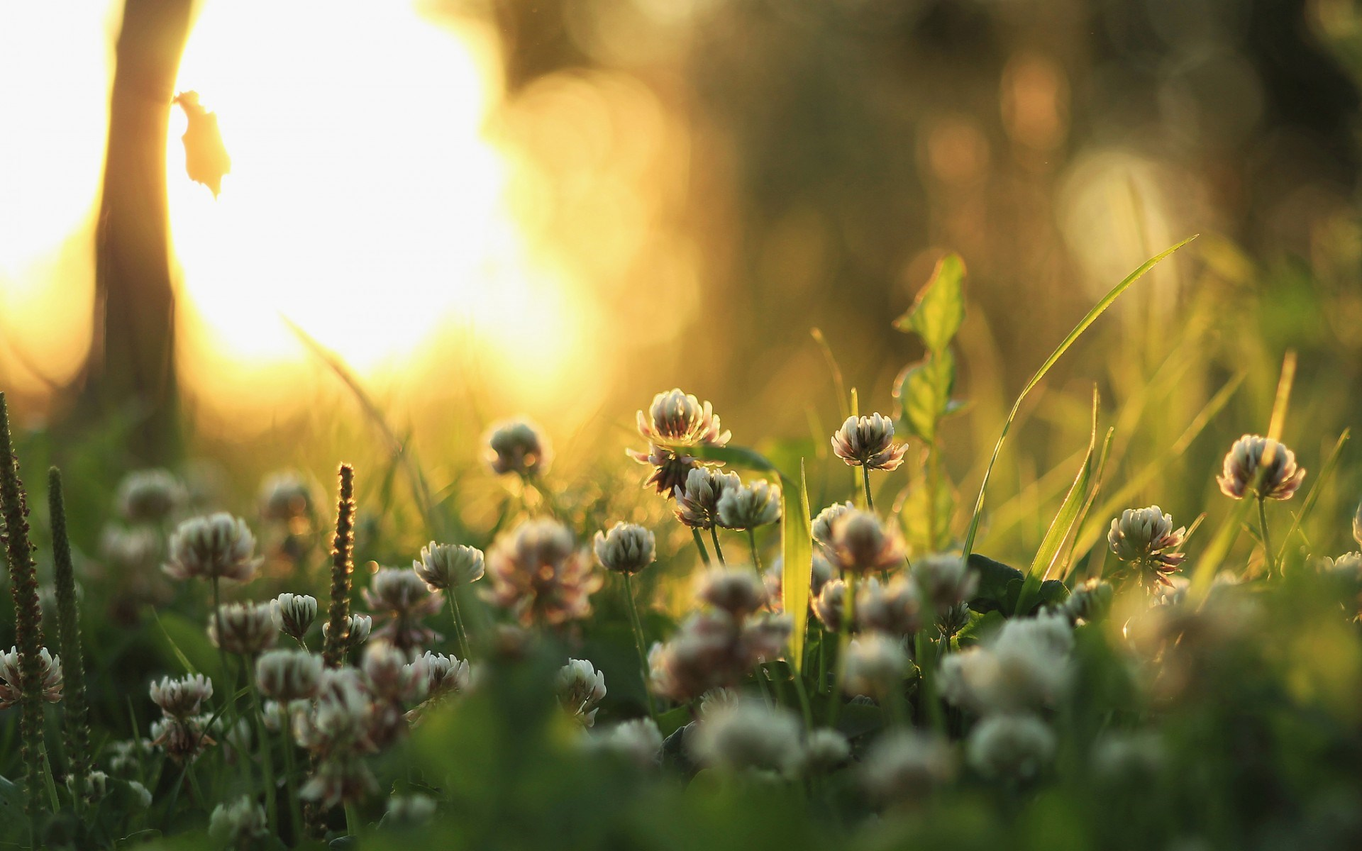 Nature Morning Grass Plants Flowers