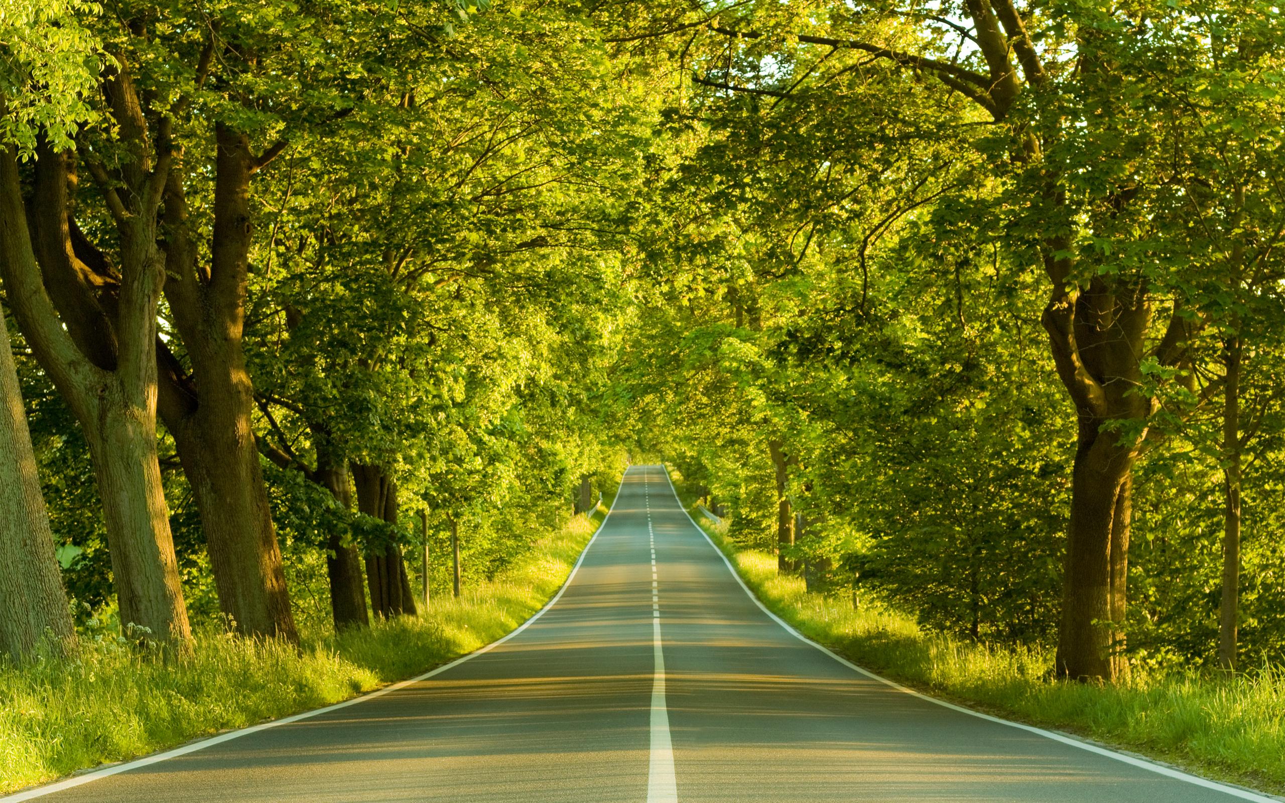 image-nature-background-1
