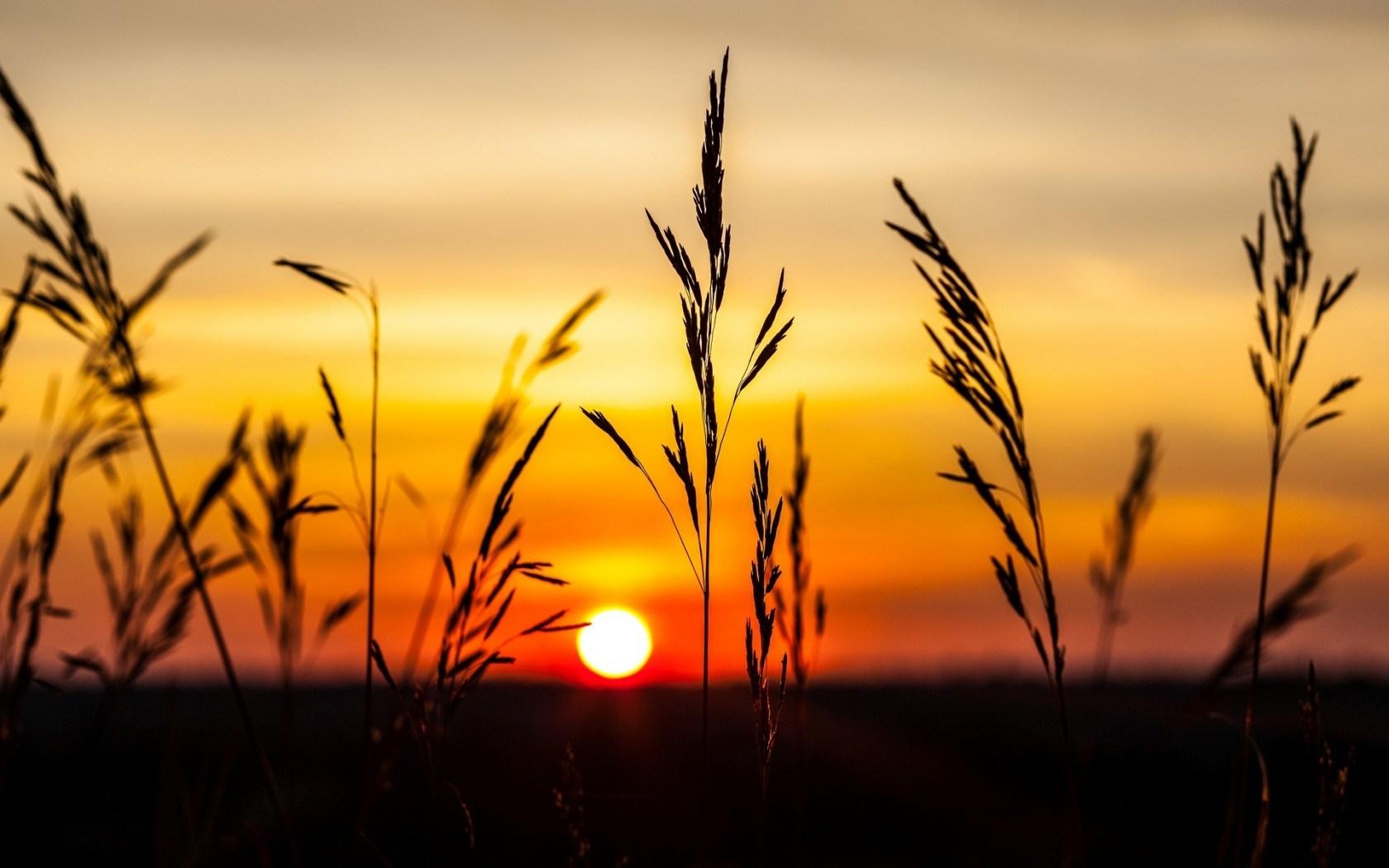 Nature Plants Sunset
