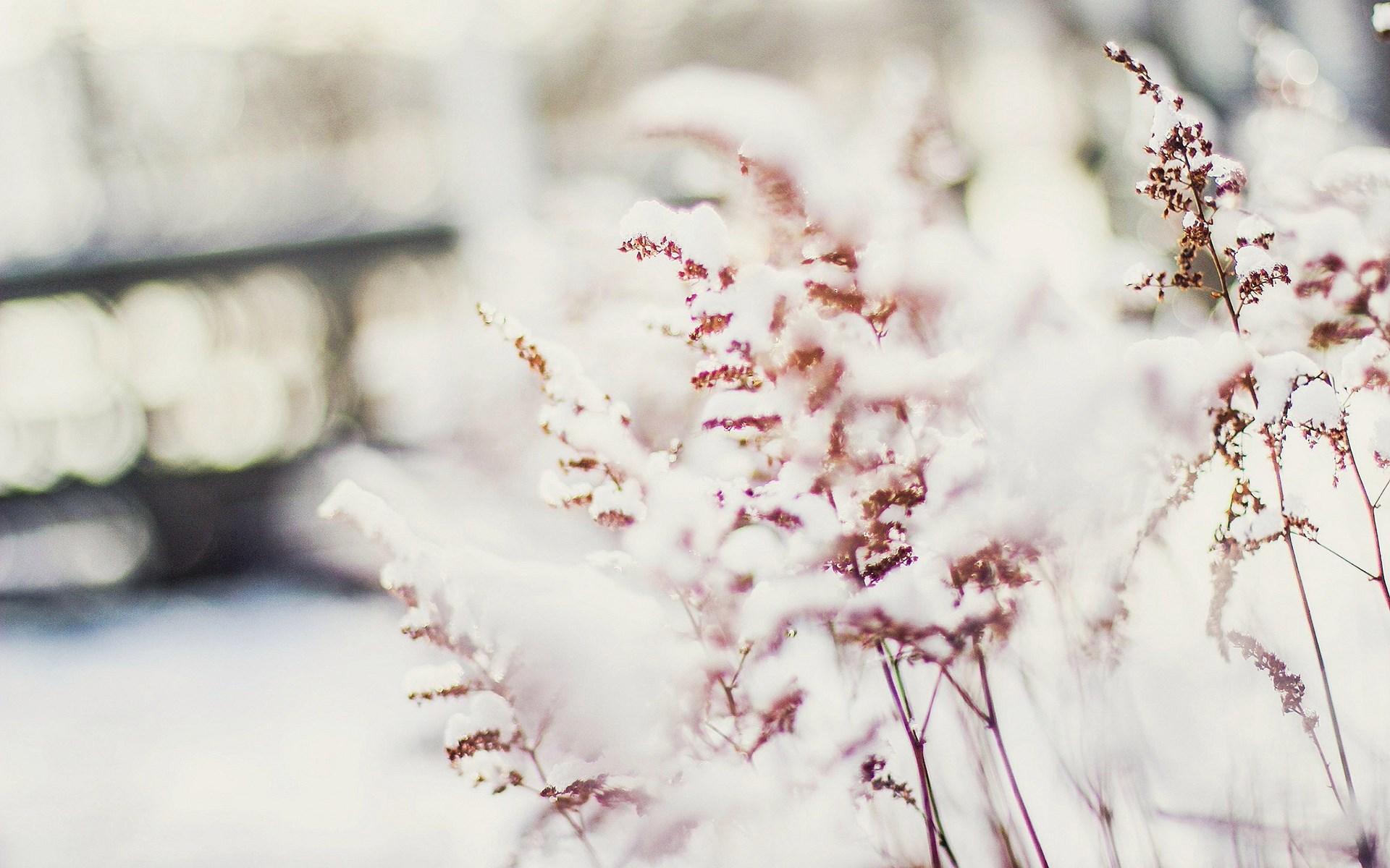 Plants Winter Snow Nature Macro