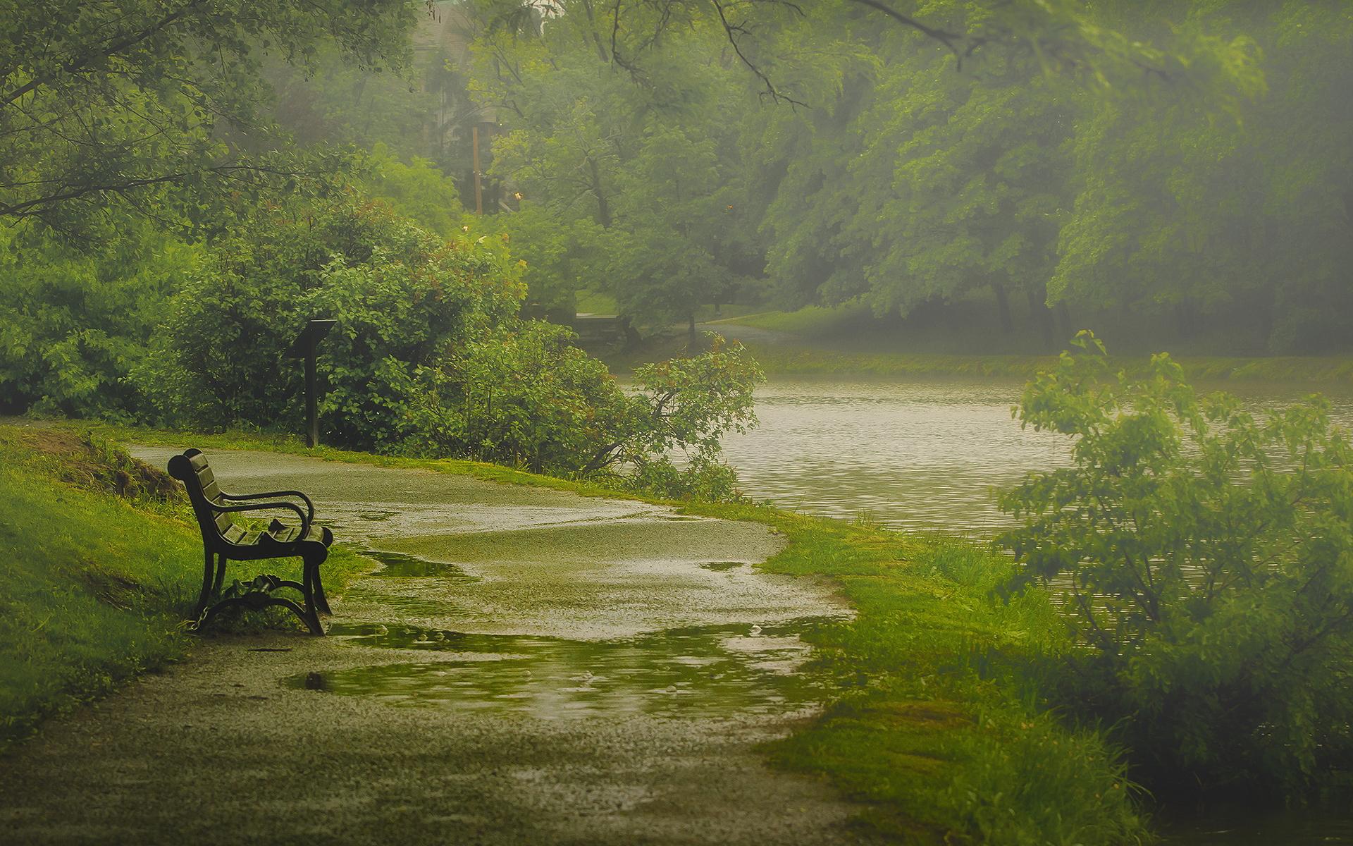 Nature rain park bench
