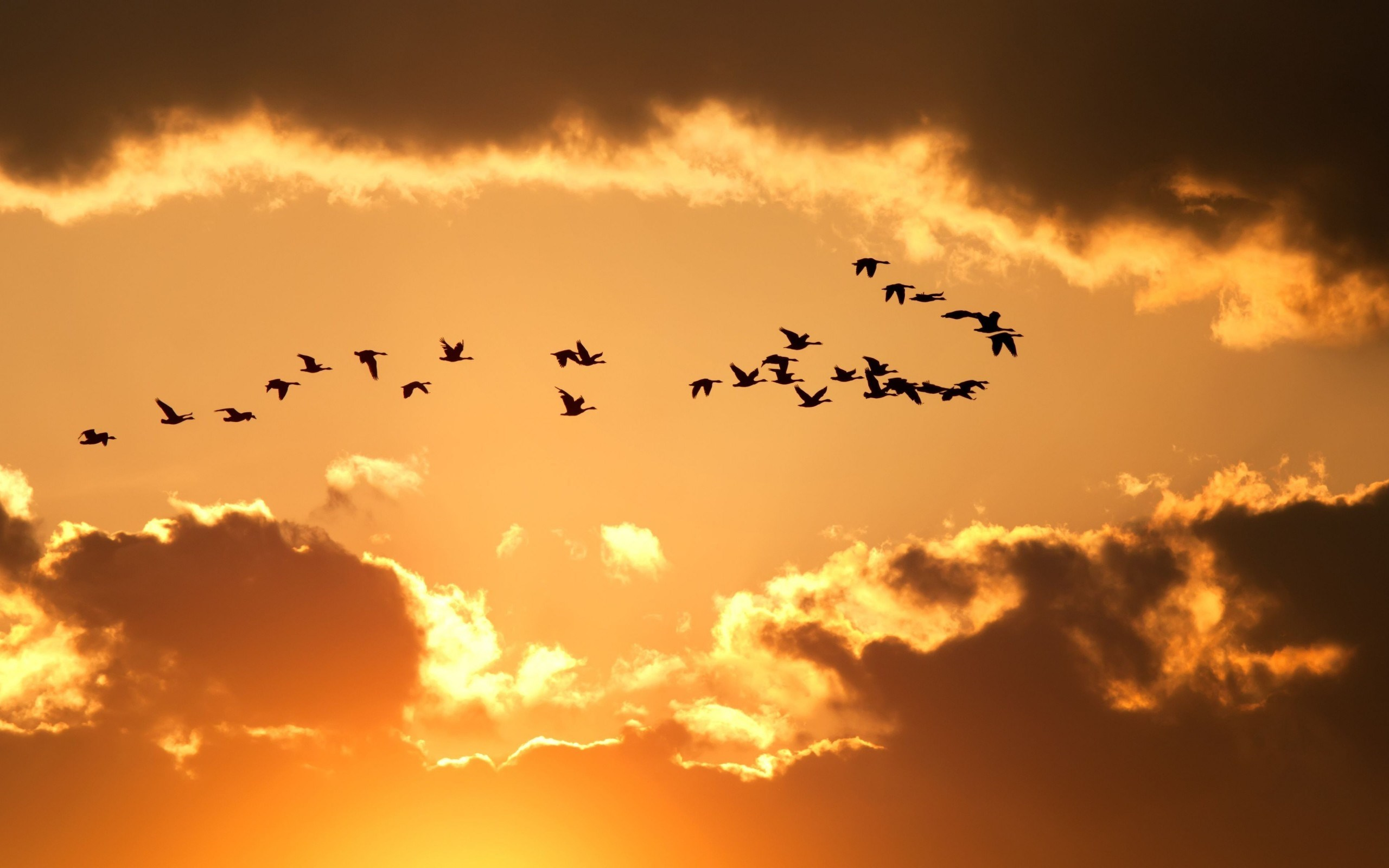 Nature Sky Birds Flying