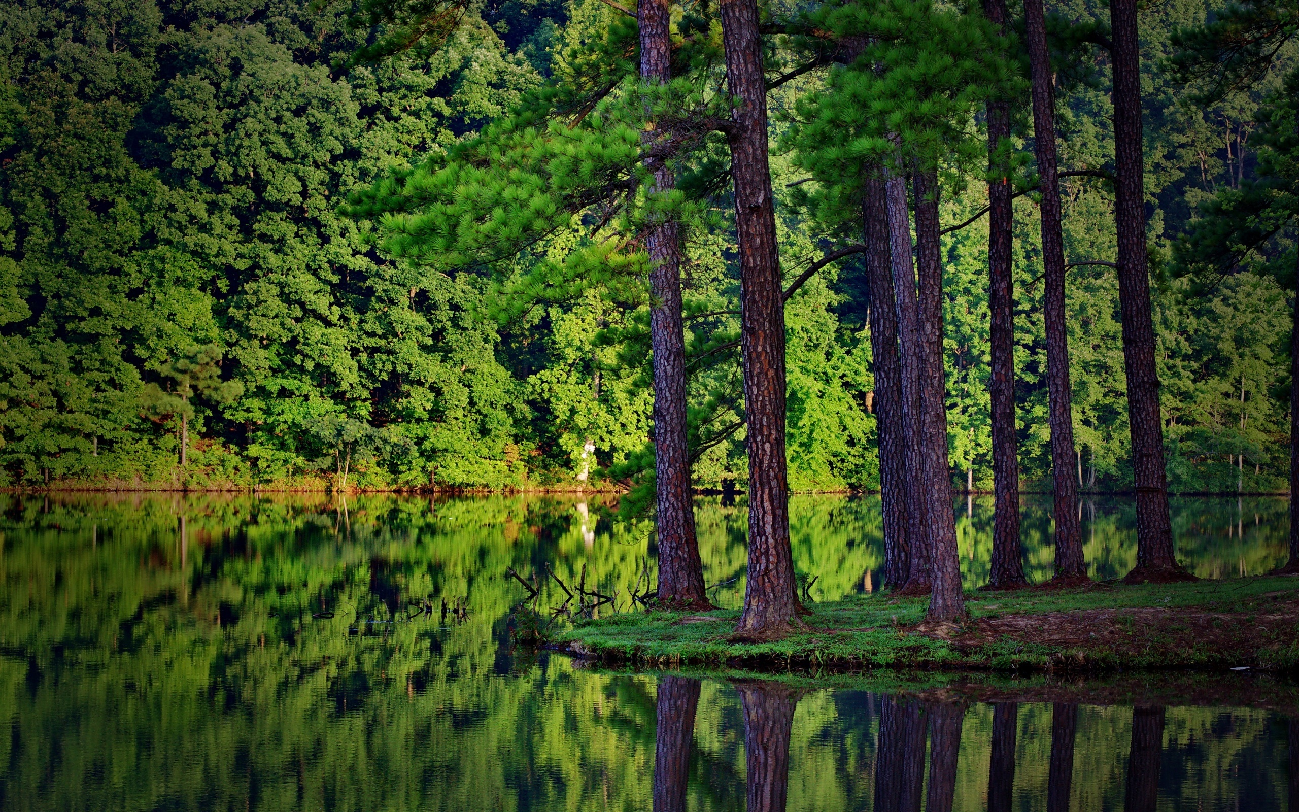 Nature, forest, spruce, river, reflection in water