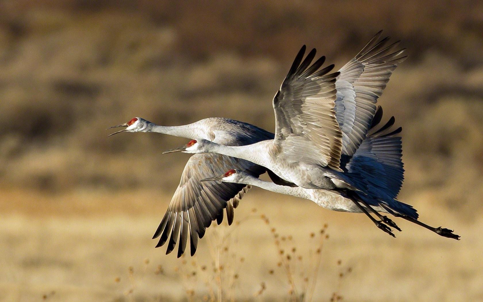 Nature Storks Birds