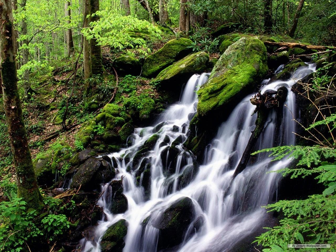 Nature Stream Wallpaper