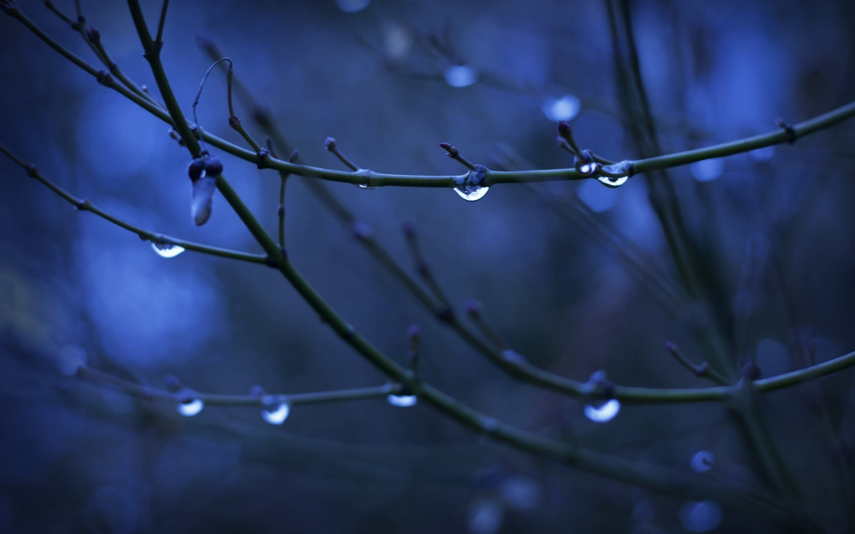 Twigs Water Drops Nature