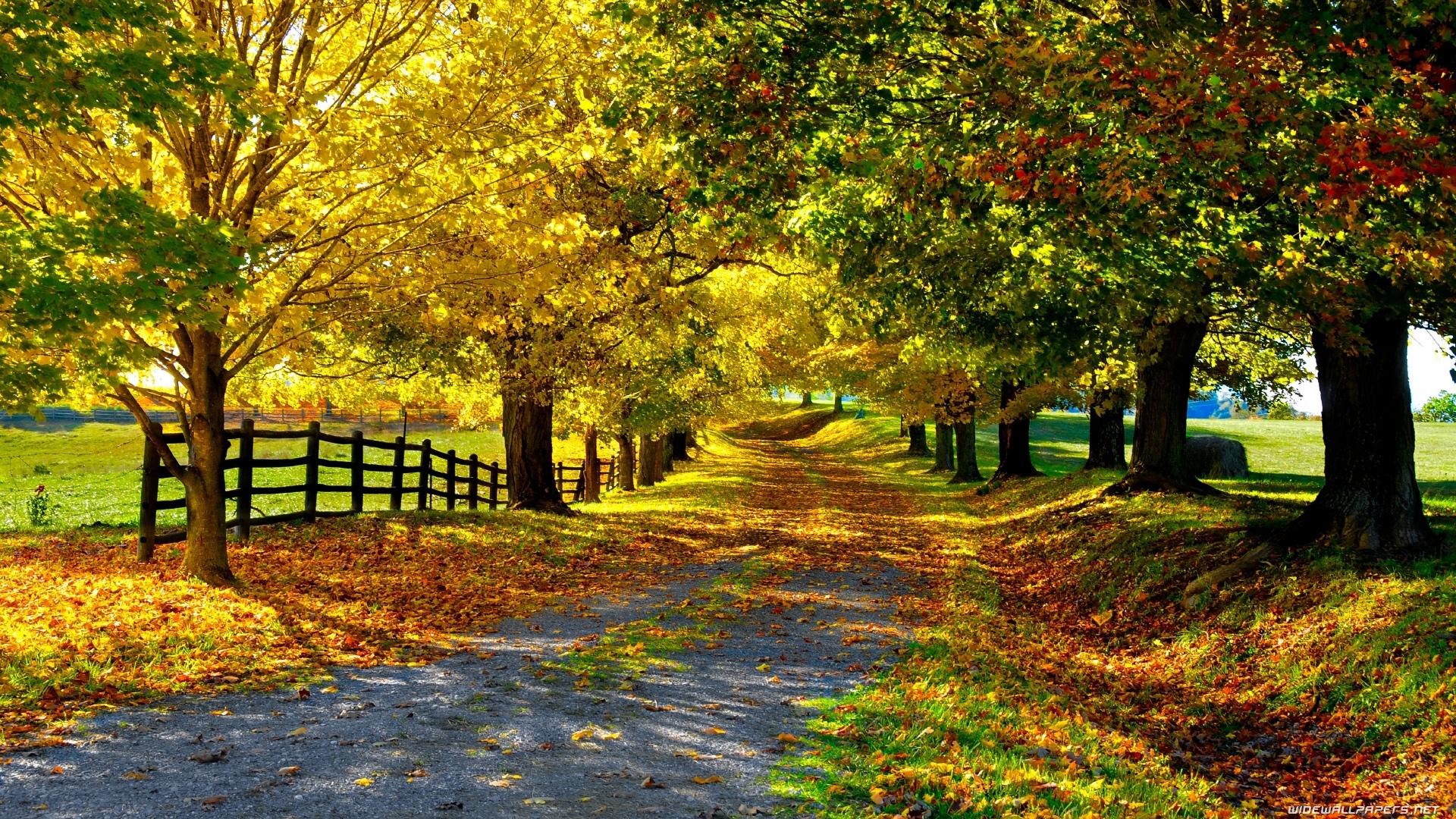 Wallpaper Nature HD