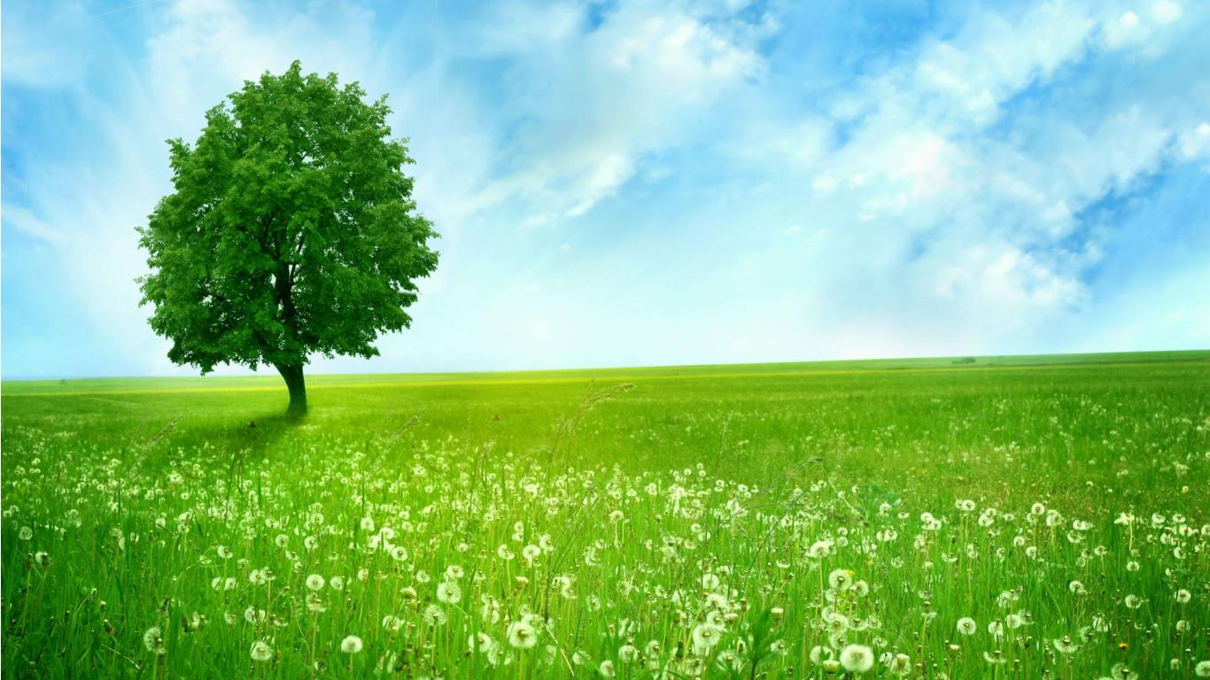 Green Nature Wallpaper Download Hd Images 3 HD Wallpapers