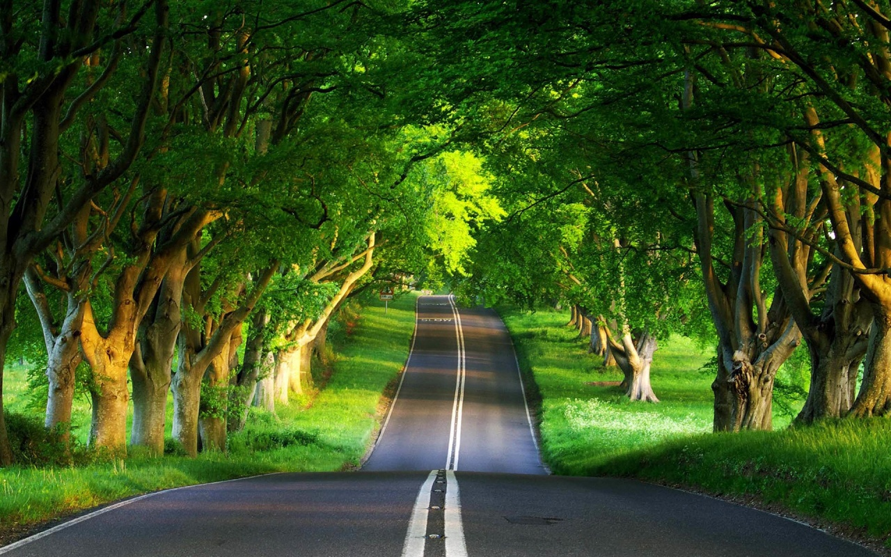 hd-wallpaper-green-forest-with-road