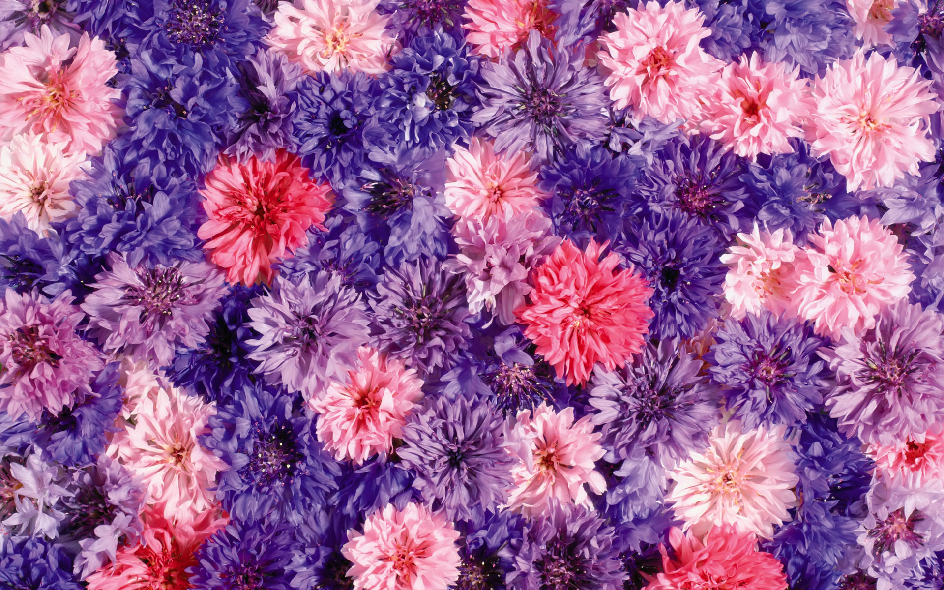 Neat Flower Backgrounds