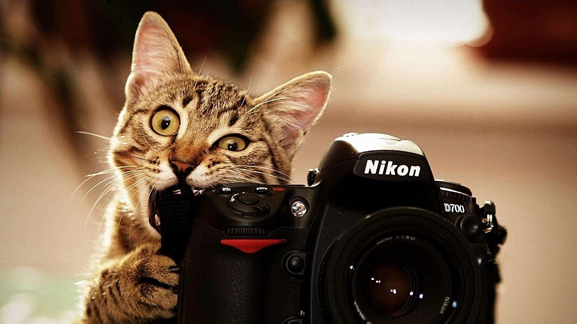 Cat Biting Nikon D Desktop Wallpaper