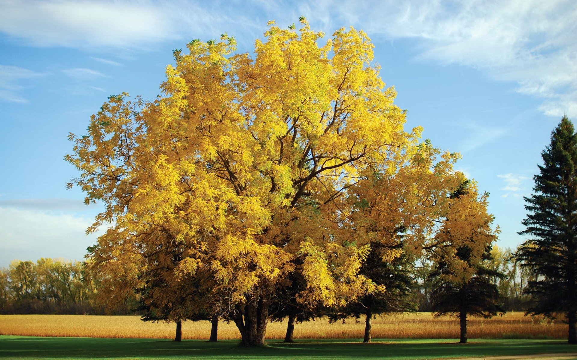 http://khongthe.com/wallpapers/nature/yellow-oak-tree-65423.jpg