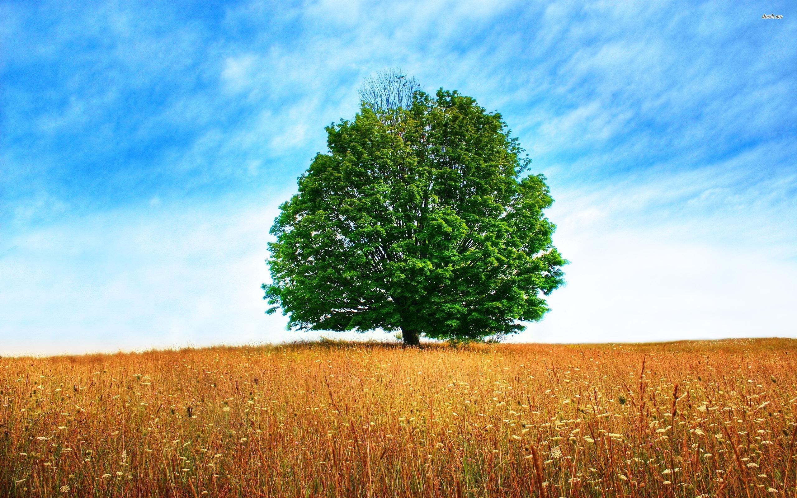 Oak Tree Wallpaper
