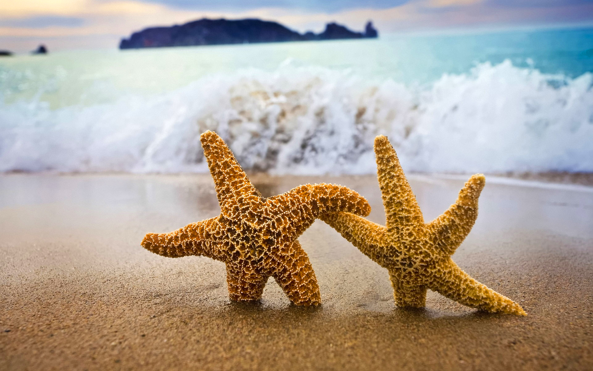 Ocean beach starfish