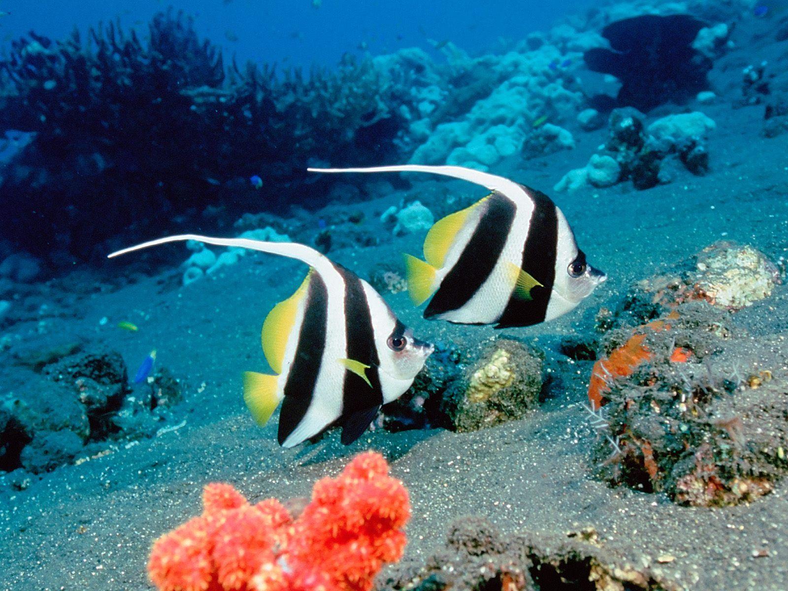 Extra Ocean Life Wallpapers