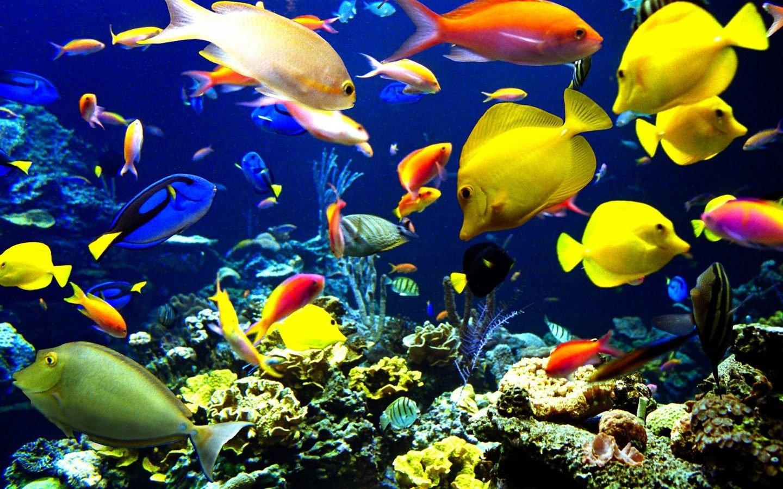 Ocean Life Pictures