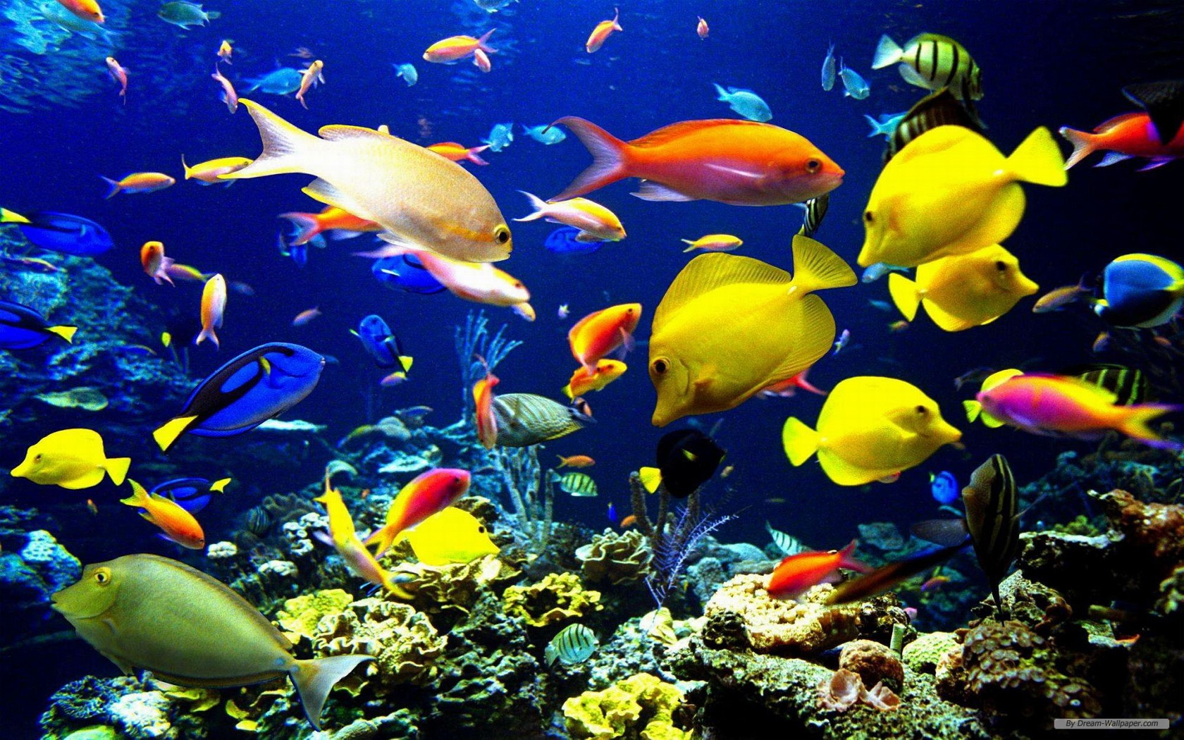 Marine Life Wallpaper 1680×1050