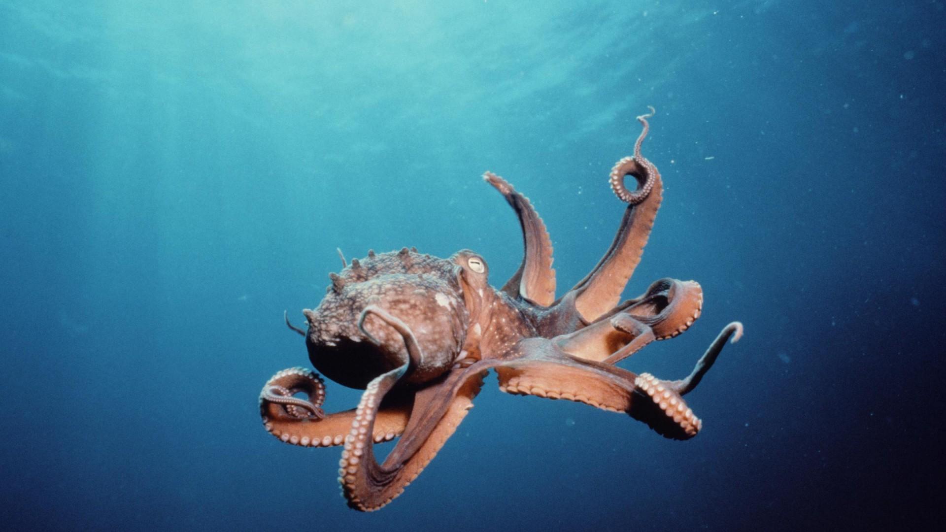 Octopus- Photo#07