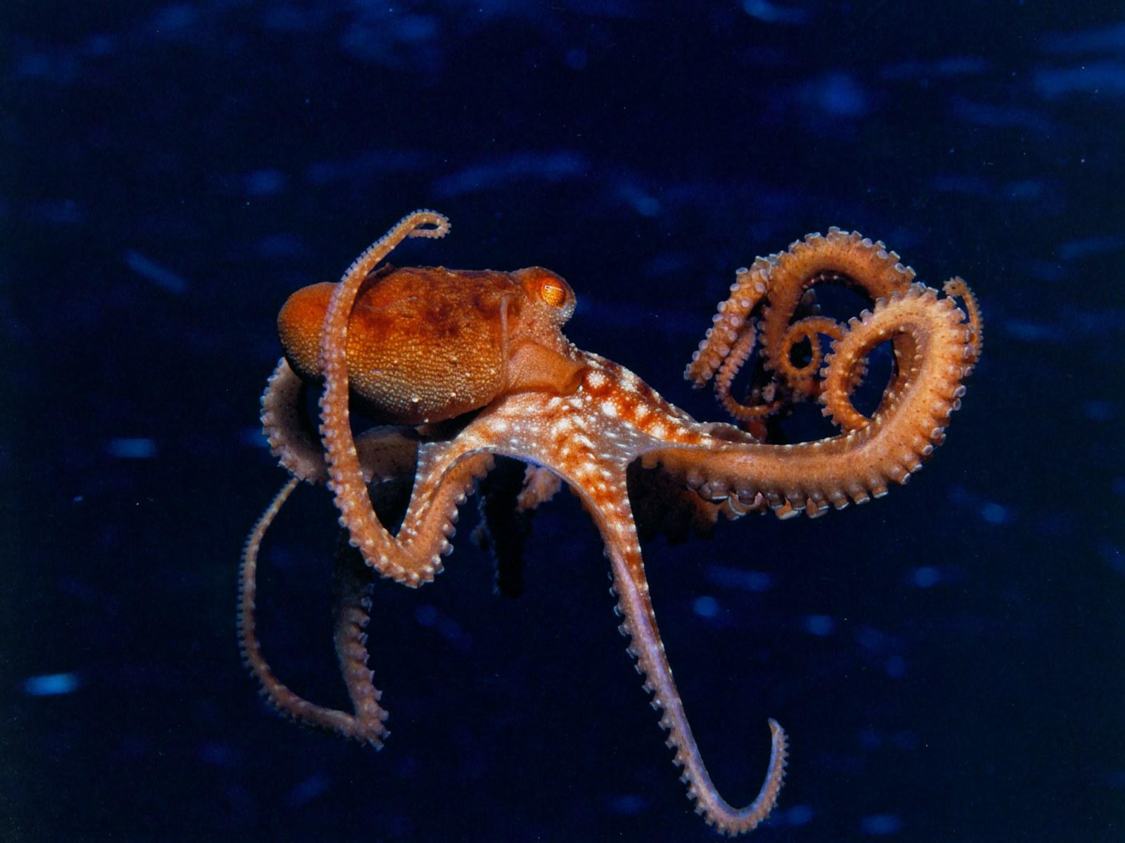 Octopus · Octopus · Octopus · Octopus ...