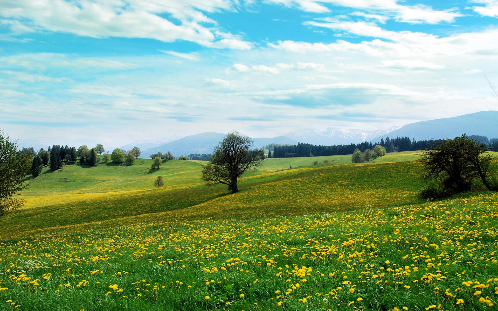 Open Landscape Wallpaper