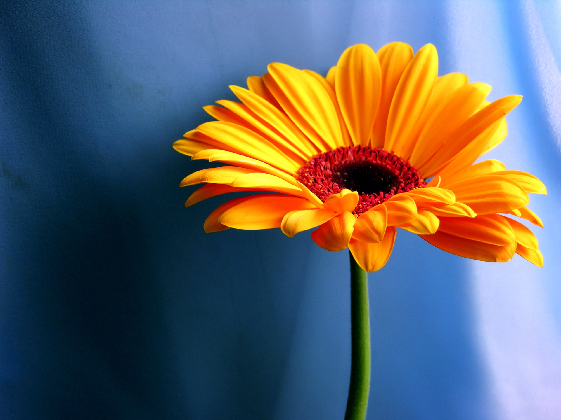 ... Orange Flower Wallpaper; Orange Flower Wallpaper