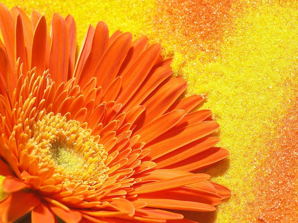 Beautiful Orange Flower Wallpaper · Orange Flower · Orange Flower ...