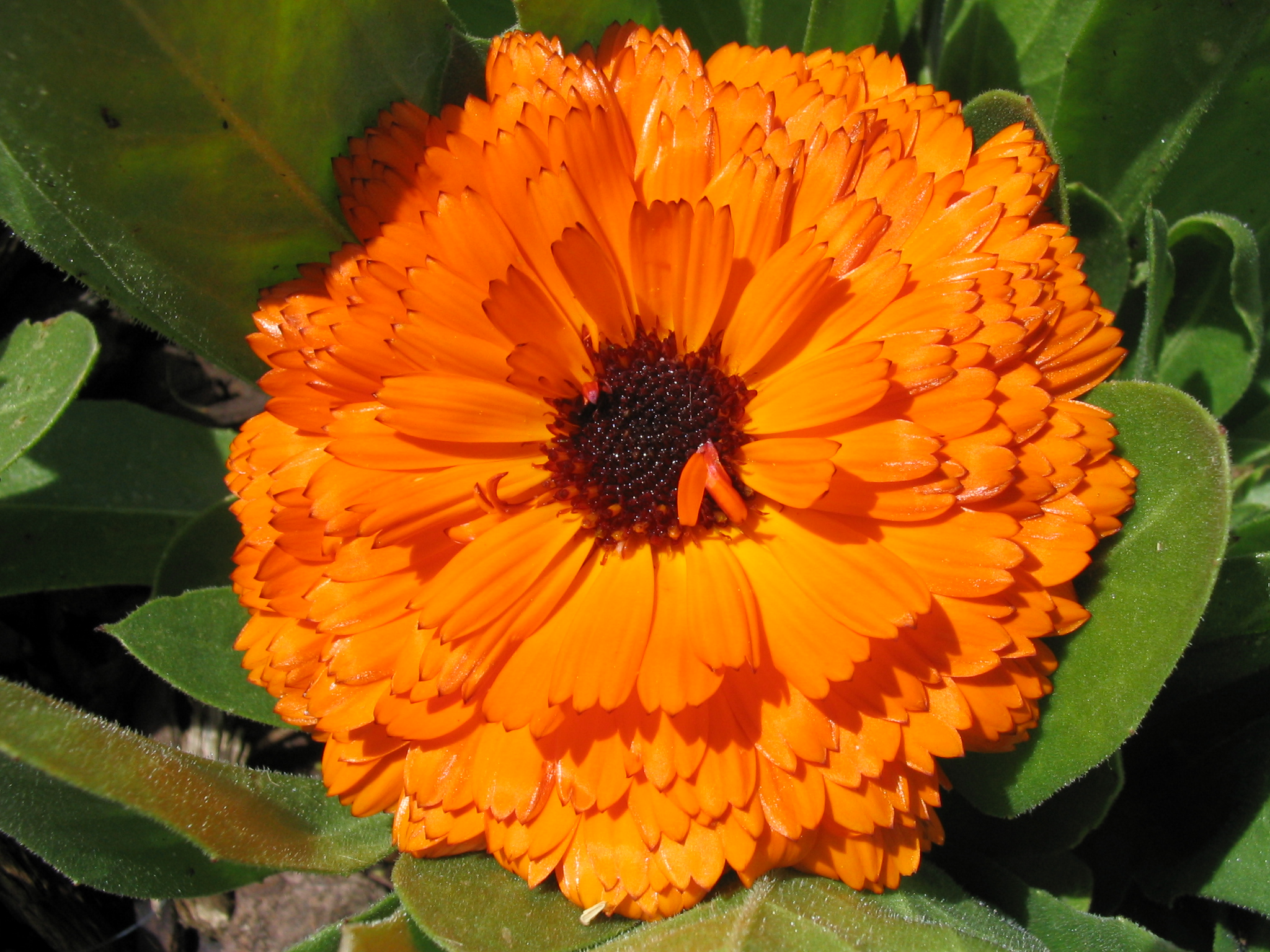 Orange Flowers Photos Hd Images 3 HD Wallpapers