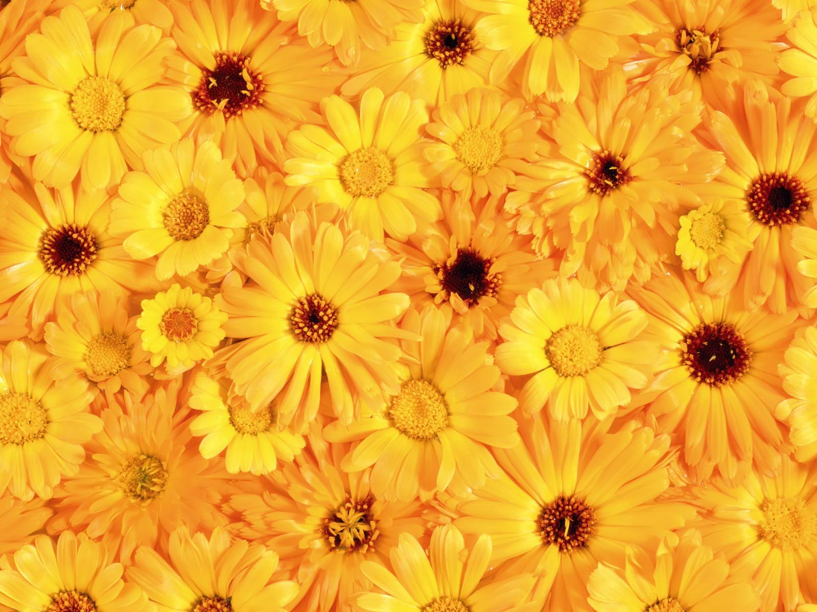 Download texture: yellow flowers, texture, flowers, flower background, flower texture