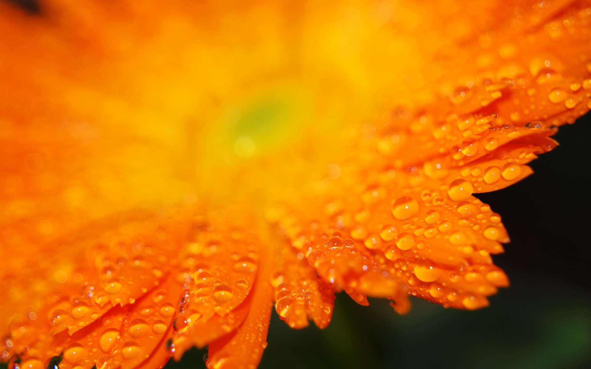 Beautiful Orange Flower Wallpaper · Orange Flower · Orange Flower · Orange Flower HD ...