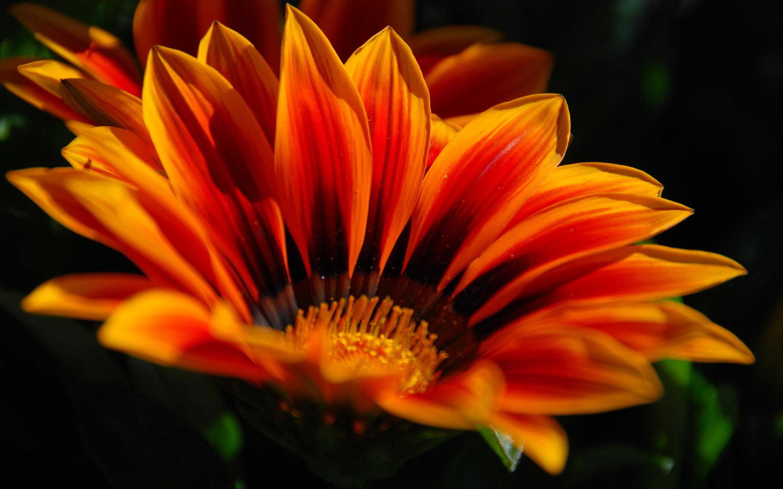 Orange Flowers · Orange Flowers · Orange Flowers ...