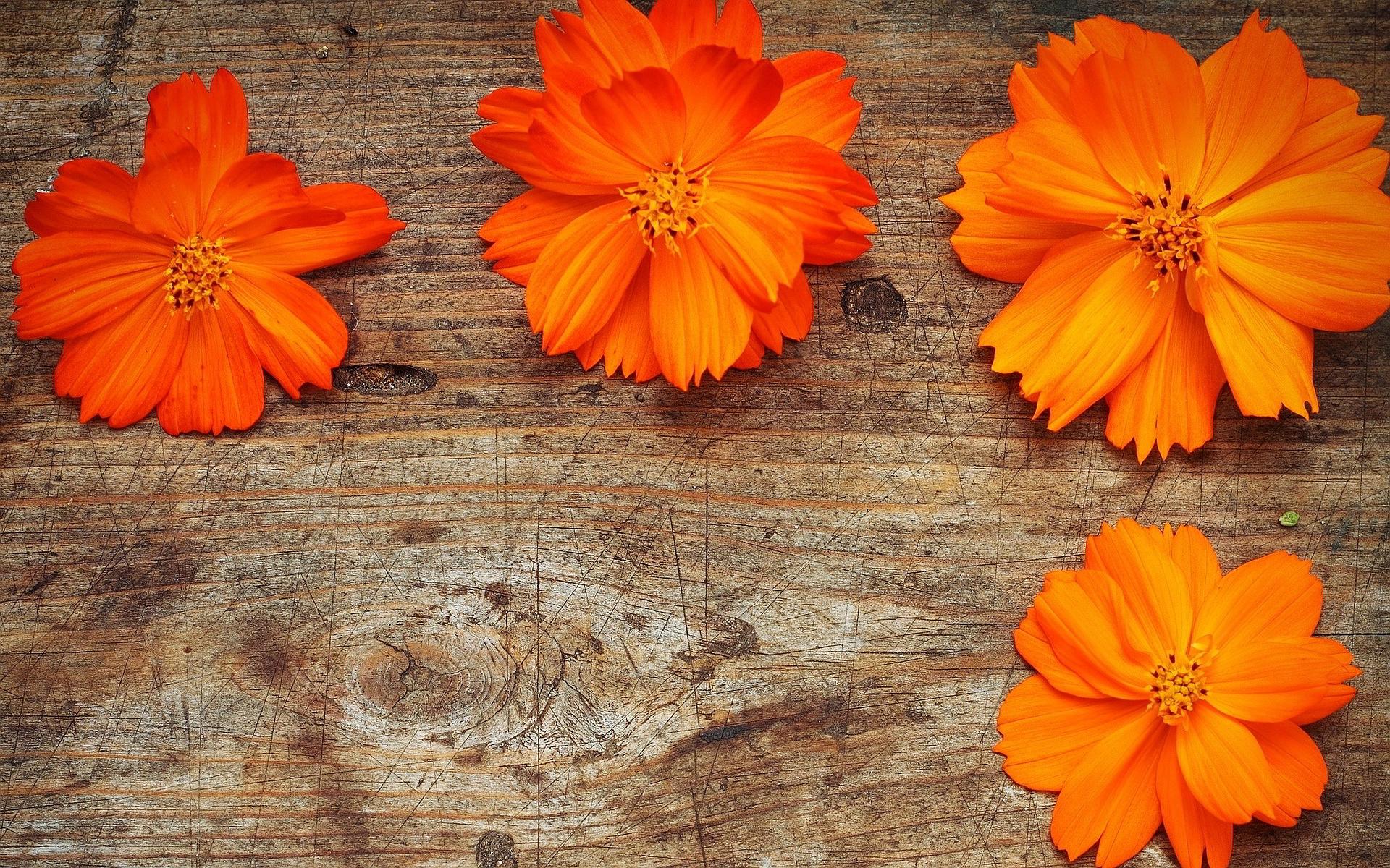 Orange Flowers Wood