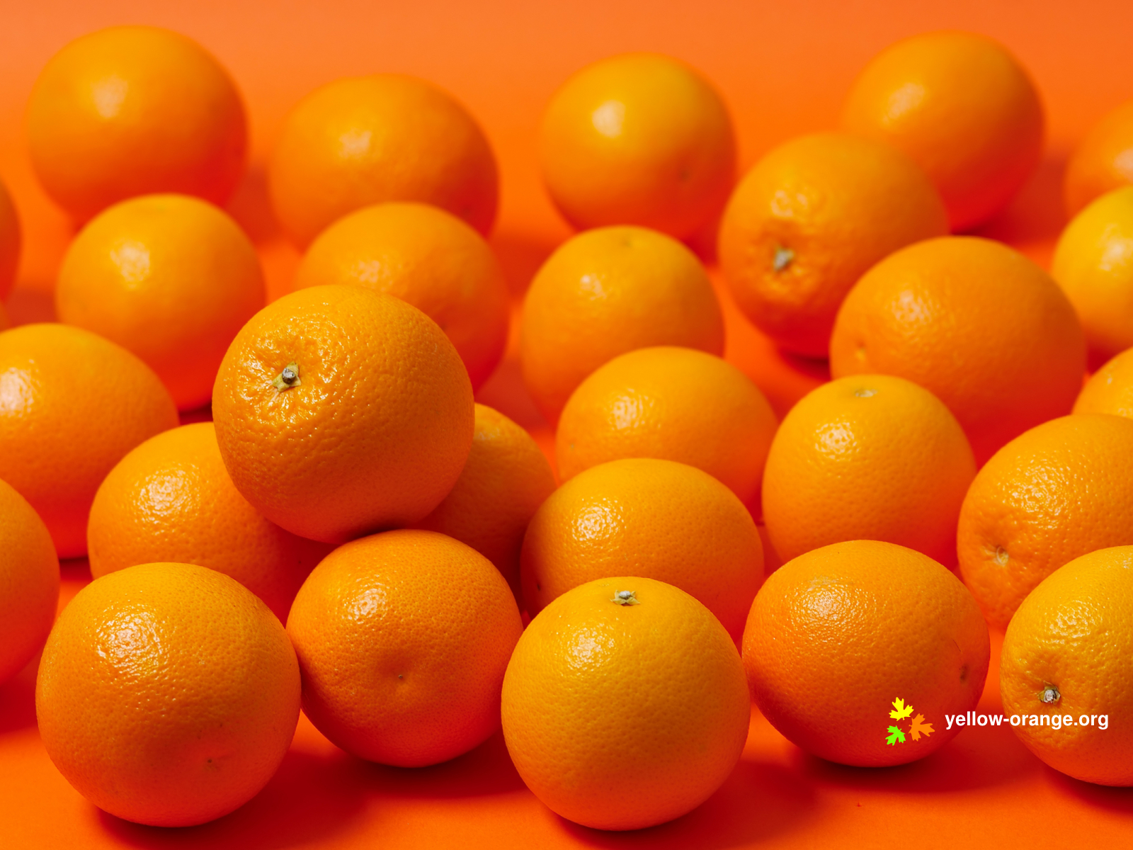 oranges wallpaper background