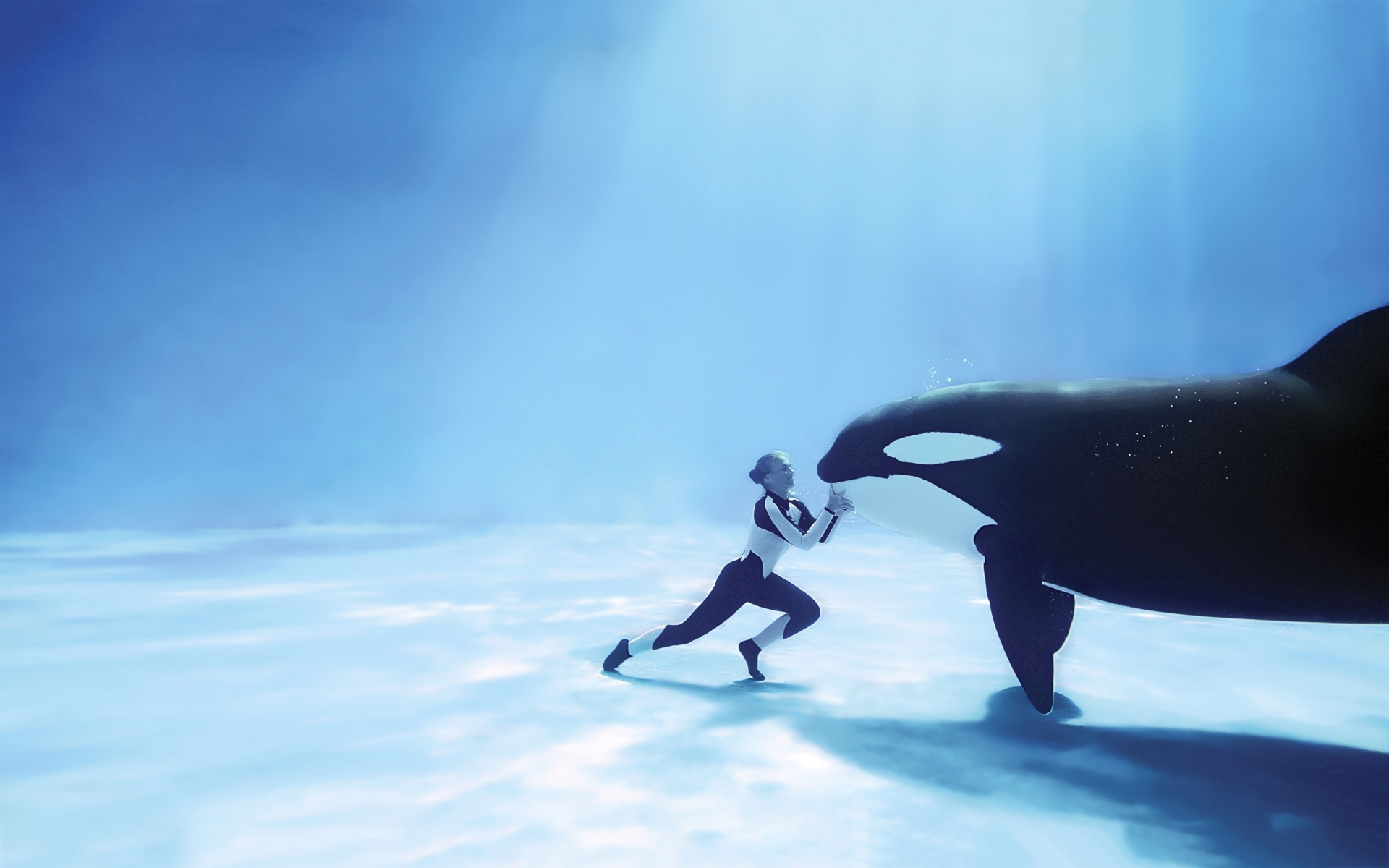 Orca underwater meet