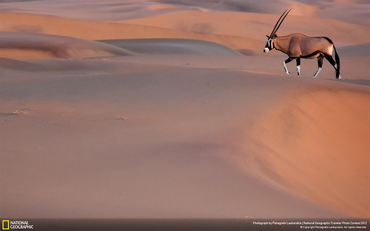 Oryx Wallpaper 41189 1600x1000 px