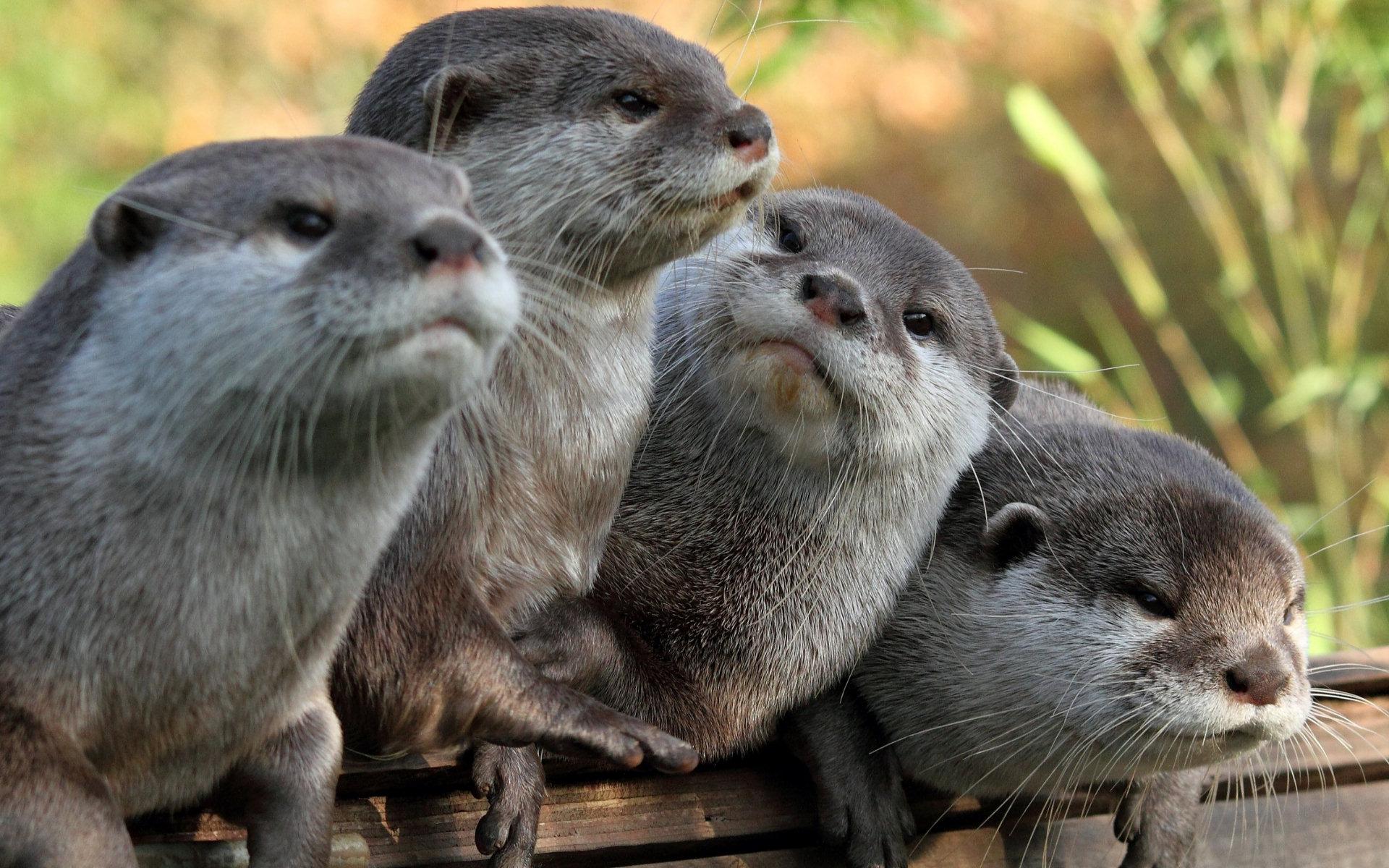 Cute Otter Wallpaper · Otter Wallpaper ...