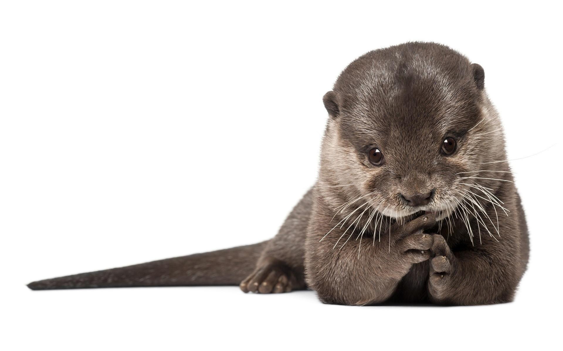 Cute Otter Wallpaper 11287
