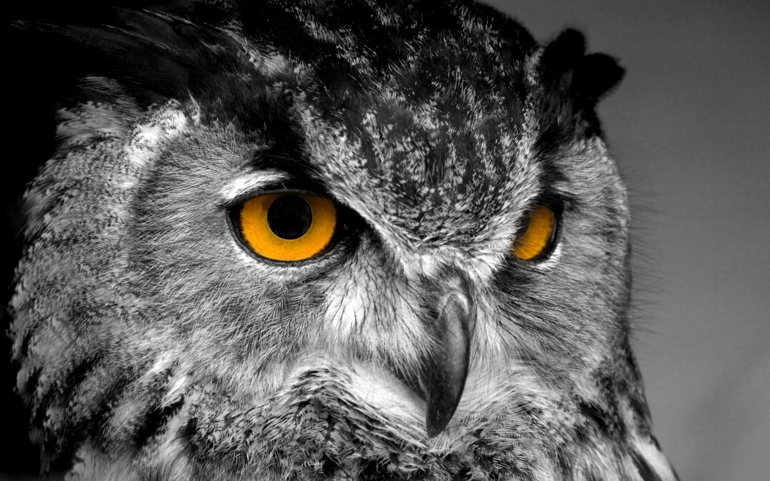 Wallpaper Owl The Wallpaper