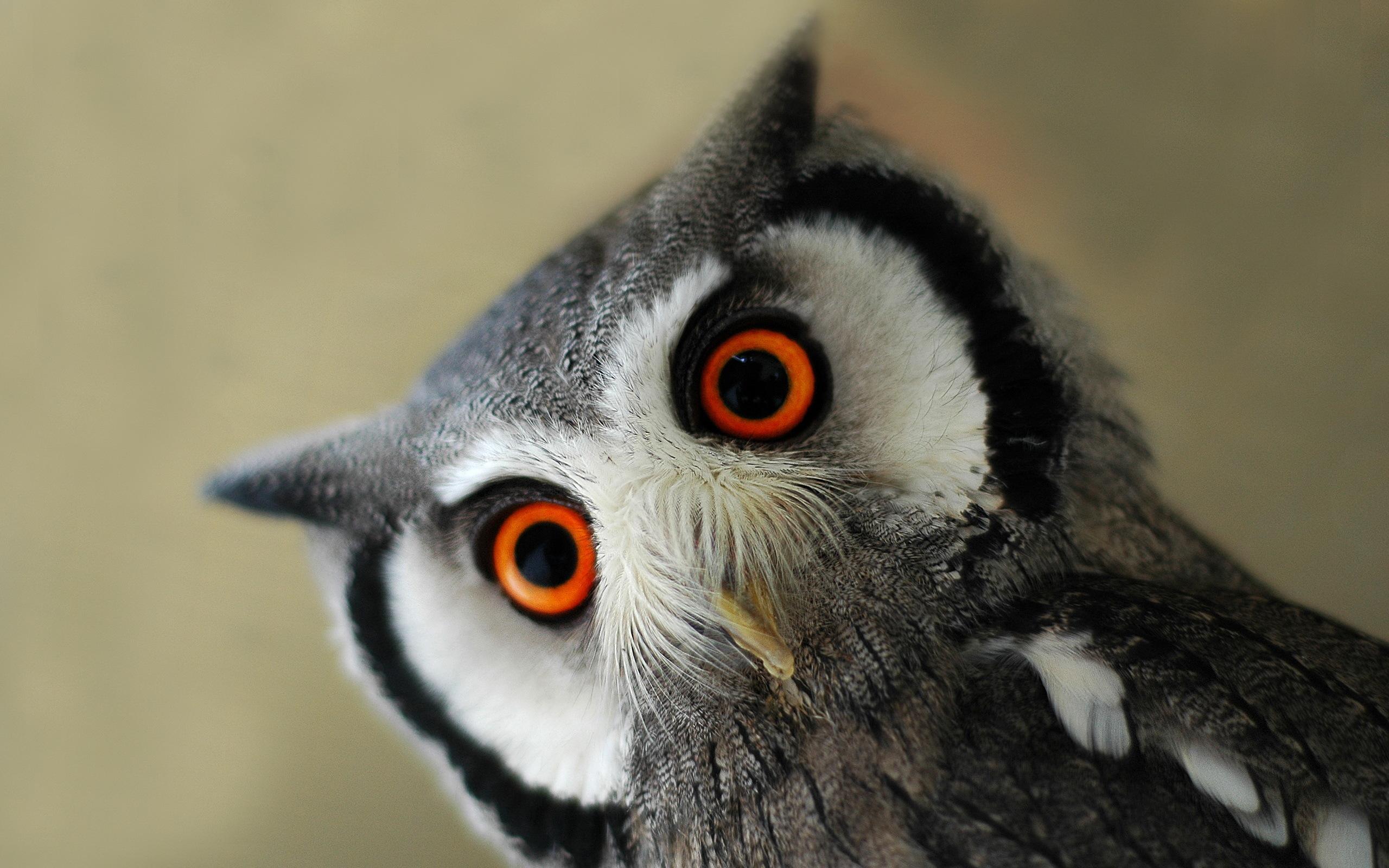 Surprised eagle owl