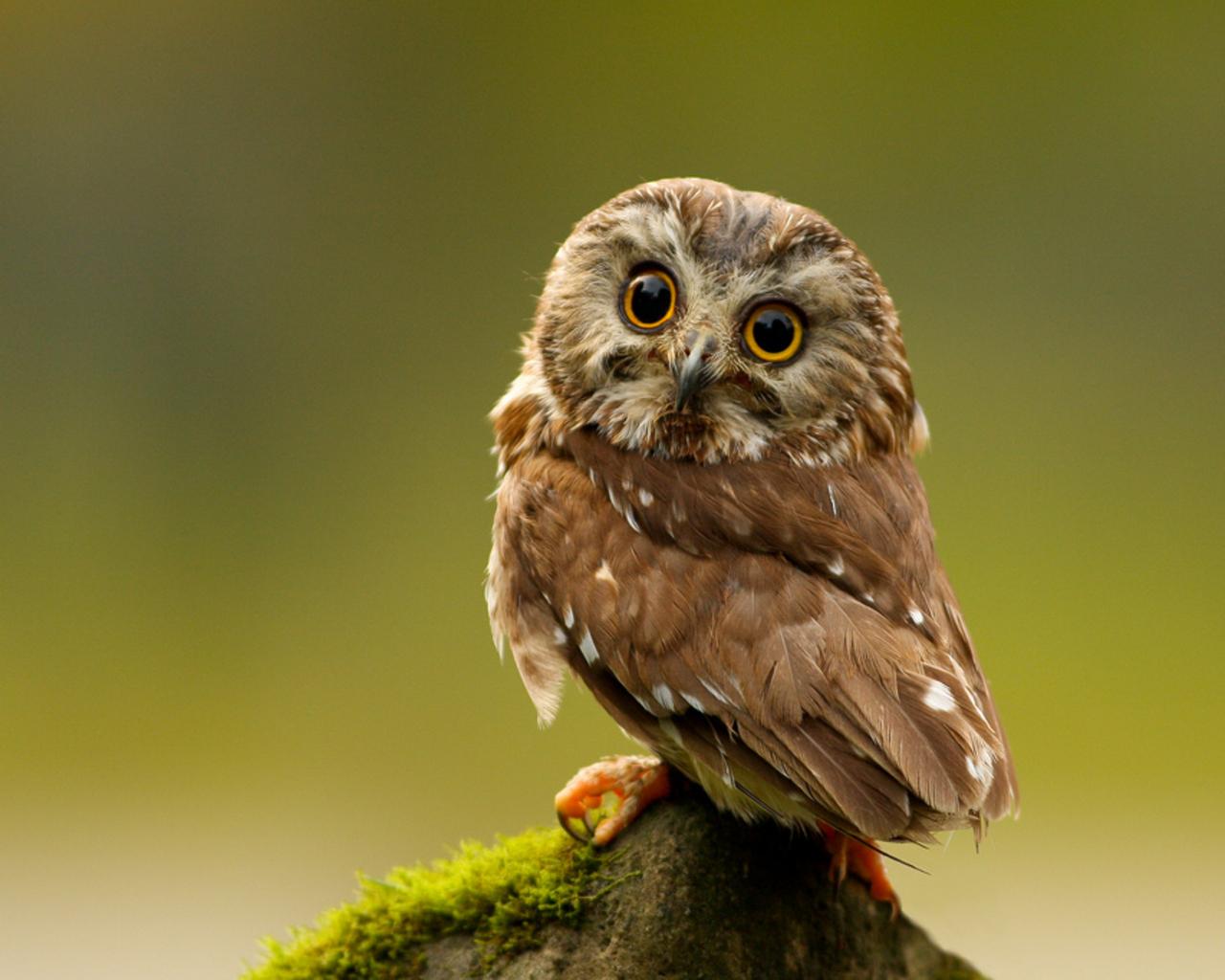Owl- Photo#02