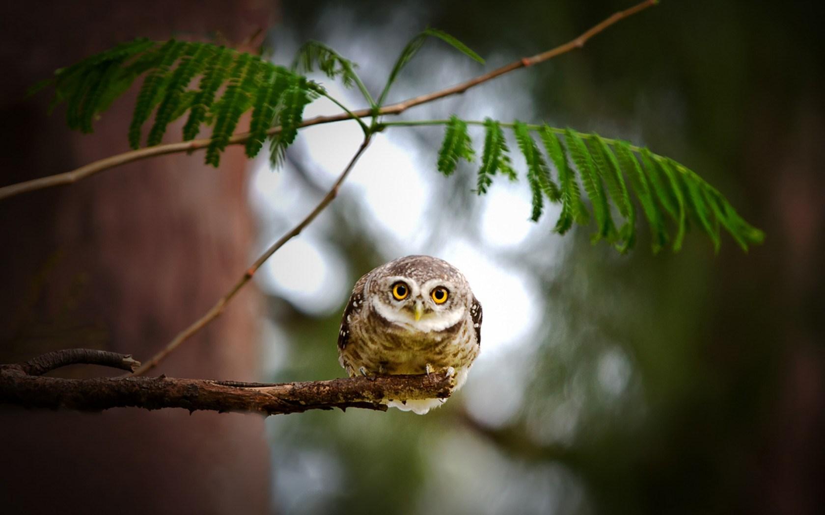 Owl Bird Eyes Branch Leaves